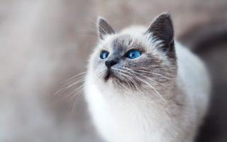白金エリア 2020年6月新築 ペット飼育相談可能ー港区賃貸マンション クレストコート白金高輪